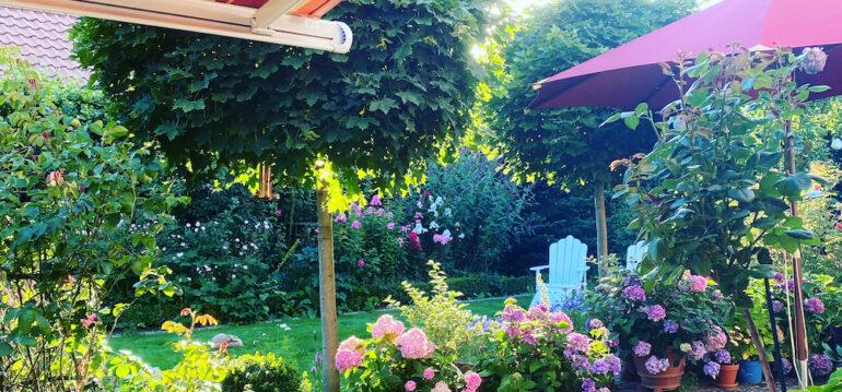 Terrasse - Hortensien - Hydrangea - Sommer - Franks kleiner Garten
