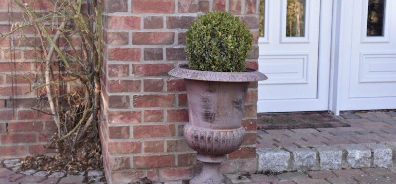 Buchsbaum - Vorgarten - Eingangstür - Amphore - Franks kleiner Garten
