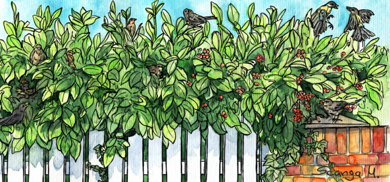 März - 2021 - Illustration - Kolumne - Hecke - Vögel - Franks kleiner Garten