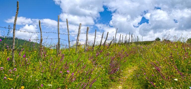 Blumenwiese, Wildblumenwiese, Wildwiese, Weg, Wegesrand, Zaun, Franks kleiner Garten