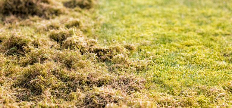 Stihl-Rasenlüfter-Vertikutieren-Rasen-Gras-Moos-Fruehling-Franks-kleiner-Garten