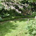 Rasen - Rasentrimmer - Hartriegel - Lupinen - Funkien - Buchsbaum - Rhododendron - Franks kleiner Garten